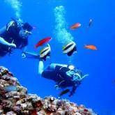 Qatar Divers