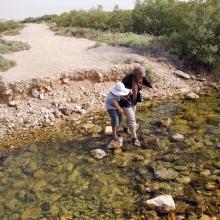 Purple Island - Al Khor Island