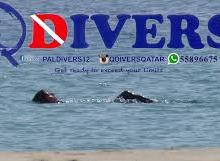 Qdivers Qatar